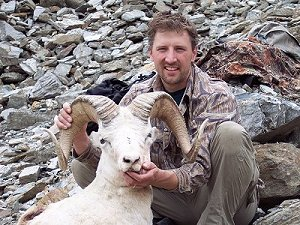 Young, but full-curl dall sheep